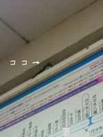 140529_2202~01のコピー.jpg